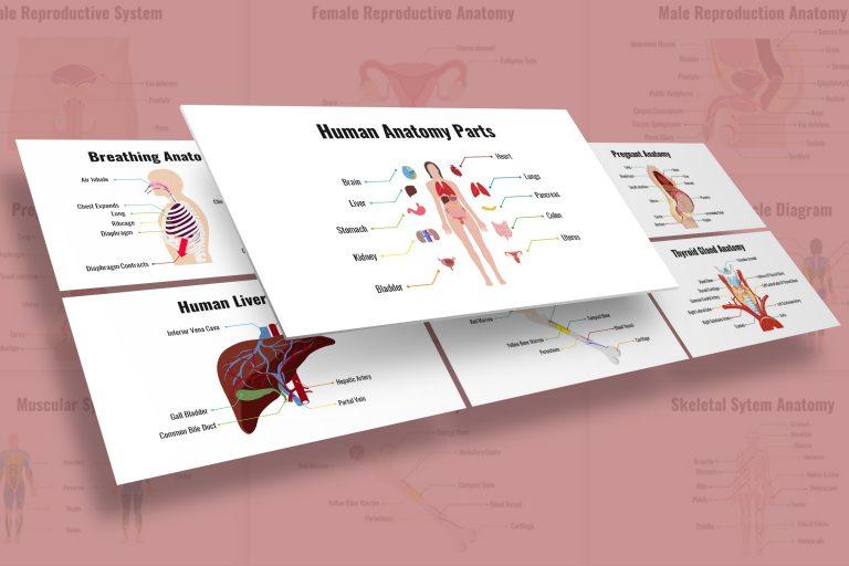 Human Organs Presentation Template
