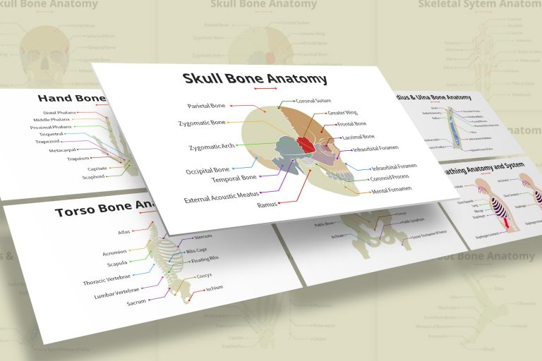 Human Anatomy Presentation Template